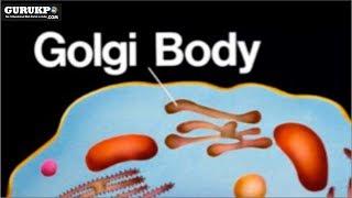 Golgi Body, BSc Biology, Biology Gurukpo
