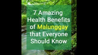 7 Amazing Health Benefits of Malunggay Everyone Should Know
