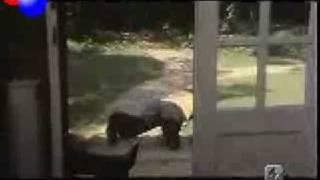 Alberto Sordi - Gorilla K2 - Di che segno sei   1975