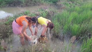 Amazing Fishing At Battambang - People Fishing In Cambodia - How To Catches Fish (Part 290)
