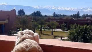Les Riads de Jouvence - Marrakech - Morrocco