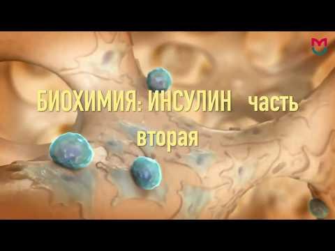 Биохимия Инсулин 2 часть