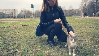 Дрессированная кошка Тверь