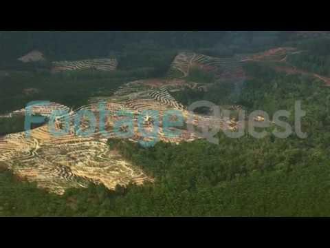 HD Aerial Shot Of Palm Oil Plantations In Kuala Lumpur, Malaysia