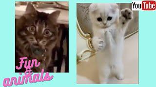 Приколы с животными сборник 25 смешные котики собаки Funny animals video Collection