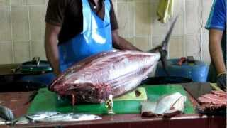 Tuna cleaned at Male, Maldives fish market