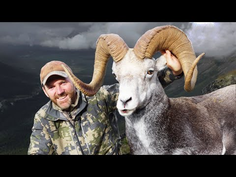 An Ancient Stone Sheep! Hunting 13 Year-old Ram In British Columbia