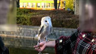 小金井の公園でフクロウと散歩されてる方がいました。