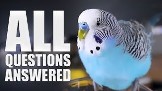 Everything You Need to know About Budgie Parakeet Care  Compilation
