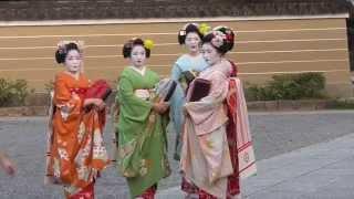 京都 宮川町の舞妓さん Maiko of Gion at Miyagawa-cho, Kyoto