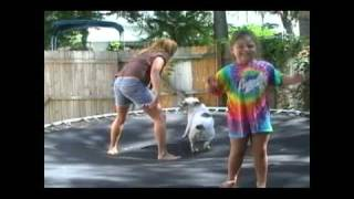 Gertie The English Bulldog Is Having Fun On The Trampoline!