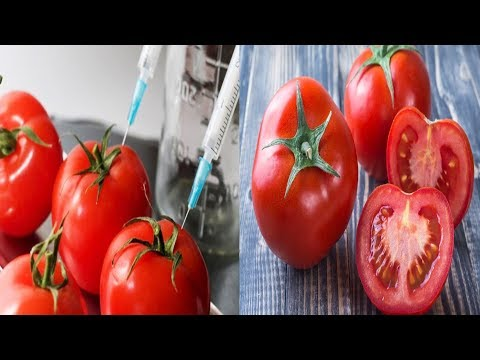 We are Eating a Poison! Here's How to Identify GMO Tomatoes in 2 Easy Steps!