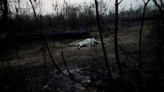 El fuego sigue devorando cientos de miles de hectáreas en el Amazonas