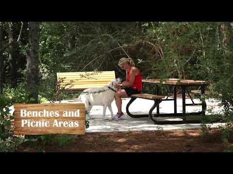 Woodtrace In Pinehurst