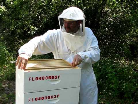 how to make honey without bees