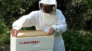 How bees make honey with Steve the beekeeper.
