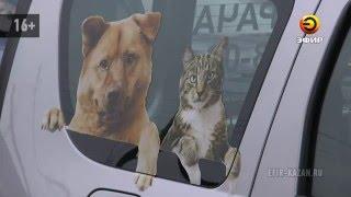 В Казани началась вакцинация животных от бешенства