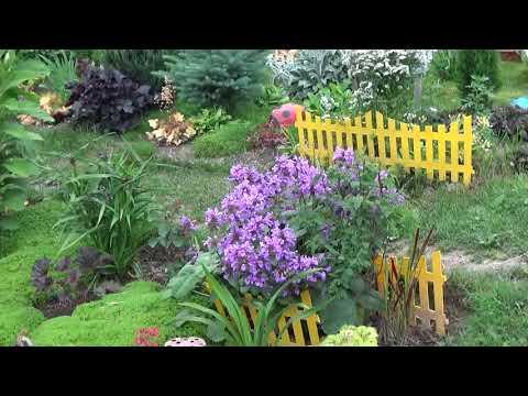 Прогулка по моему саду ! Цветёт  клематис и другие растения !