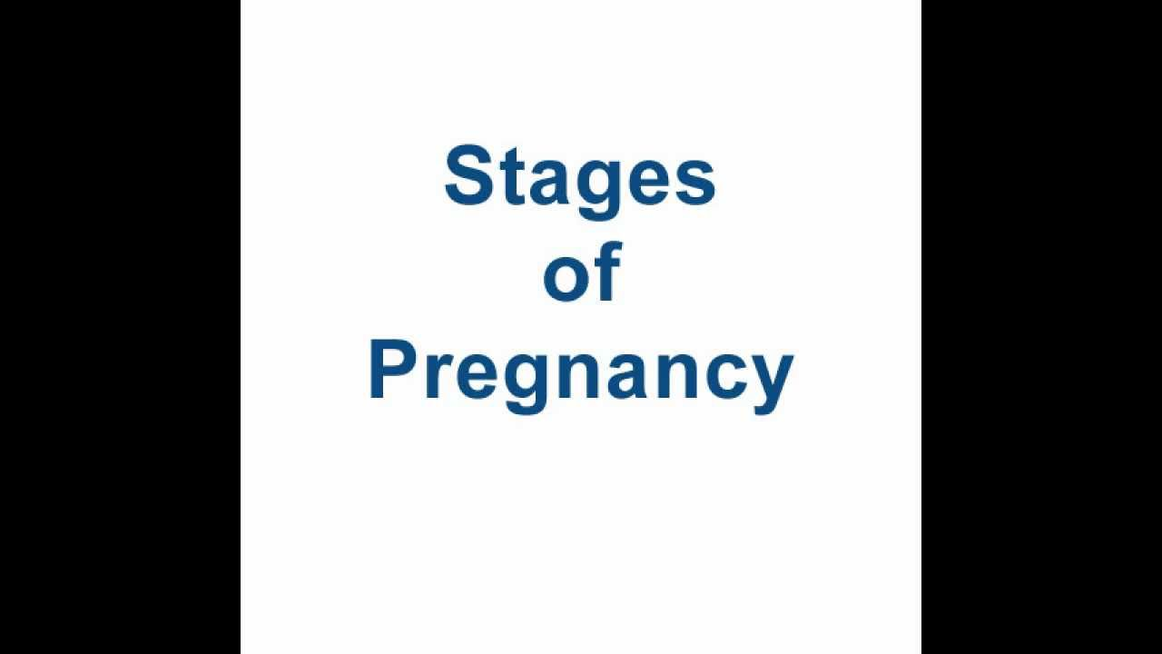 stages of pregnancy   youtube