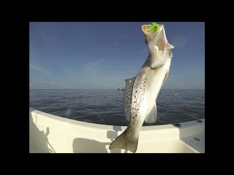 Speckled Trout Fishing Cocodrie, Louisiana