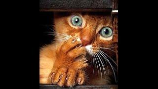 Приколы про котов.Домашние животные.Приколы.Кошки--- прятки!
