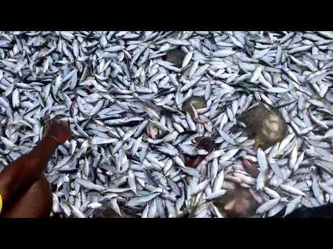 Goa Fishing