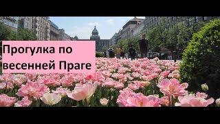 Погуляй со мной 2: весенняя Прага