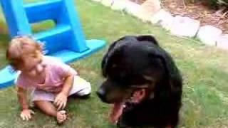 1yr Old Baby Attacks Rottweiler