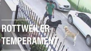 ROTTWEILER TEMPERAMENT thumbnail
