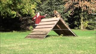 Emma (german Shepherd) Boot Camp Dog Training Demonstration