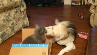 Alphee the Cat & Nixee the Dog - Play Time