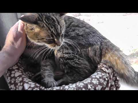 Signs & Symptoms Of When It Is Time To Euthanize A Cat