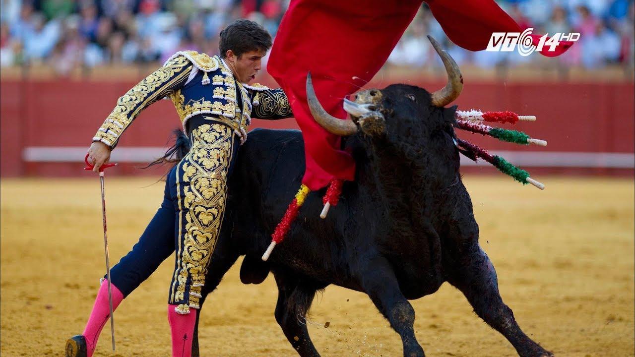 Download VTC14   Tây Ban Nha tiếp tục chia rẽ vì cấm lễ hội đấu bò