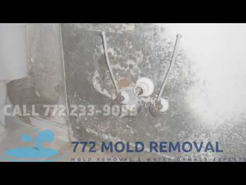 Best Mold Removal Service is 772 mold removal  || mold removal port st. lucie florida