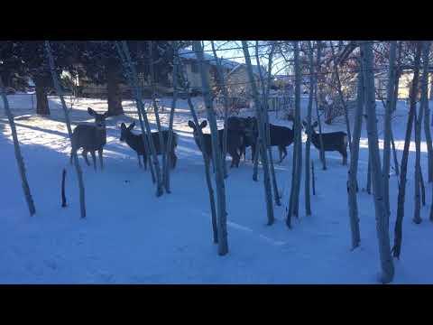 Deer in search of bunny food