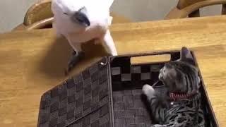 Kediyi kutuya hapseden papağan
