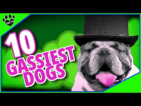 10 Gassy Dog Breeds - Dogs with the Worst Farts
