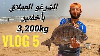 صيد أكبر أسماك شرغو بأخفنير بوزن  (3,200kg).  vlog 5