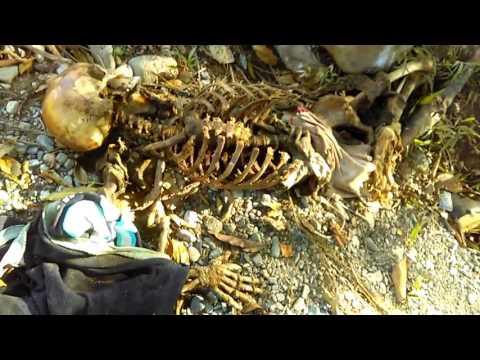Panama jungle de donky ... jungal vich ek munde di dead body