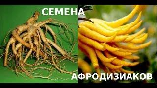 Лучший подарок - семена афродизиаков
