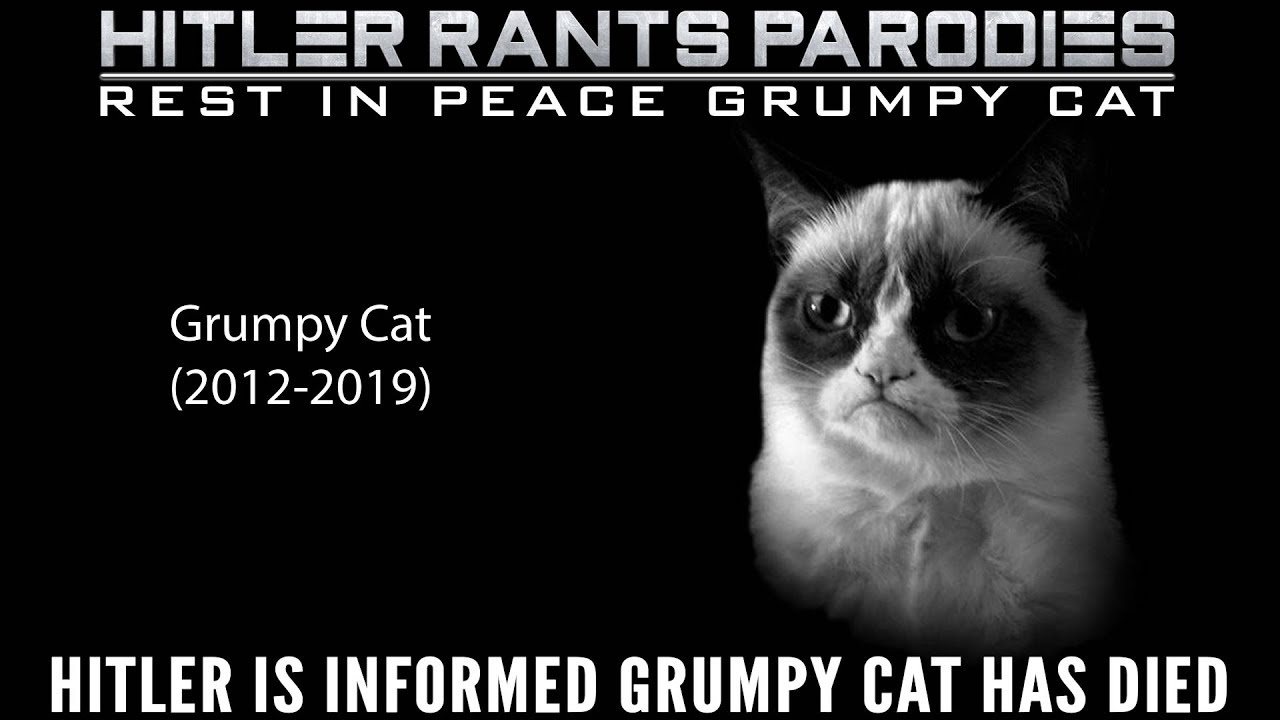 Hitler is informed Grumpy Cat has died