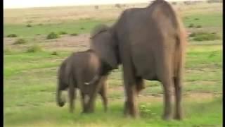 Keňa 2018/01 - Sloni, národní park AMBOSELI