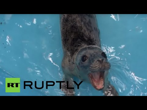 Seal of approval: Tiny sea mammals rescued in Leningrad region, Russia