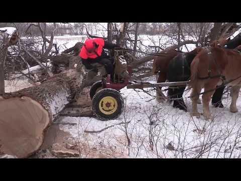 Draft Horse Logging for Local Lumber