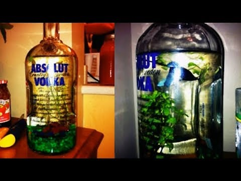 Best And Worst Betta Fish Tank Set Ups Episode 2 | Tuesday Tank Reviews