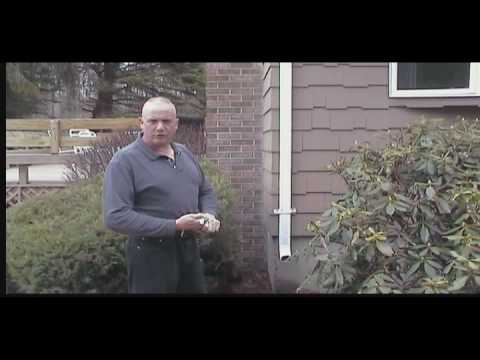 Quot City Of Calgary Downspout Ice Frost How To Clear A