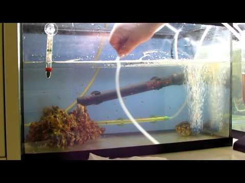 How To Change Water And Clownfish Babies Day 15