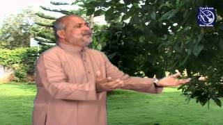 Pithave Aaraathikkirom - Fr. S. j. Berchmans