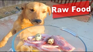 Sasha the Dog Eating Turkey Neck, Chicken Feet, Pork Skin, Blueberry, Quail Egg ASMR & Mukbang