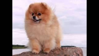 ТОП 10 самых красивых пород собак в мире